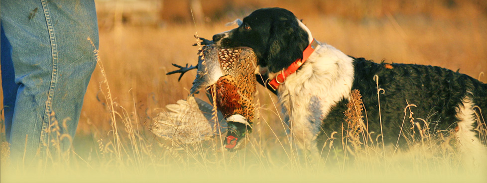 Professional guides pride themselves in working some of the best bird dogs in the state.