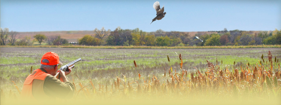 Over 10,00 acres of the finest pheasant, quail and prairie chicken habitat in the scenic Blue Hills.